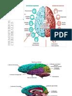 Hemisferios y Funciones Cerebrales