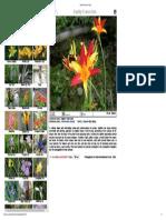 Garden Flowers of Ind56ia