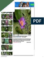 Garden Flowers of India3