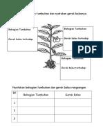 Labelkan Bahagian Tumbuhan Dan Nyatakan Gerak Balasnya