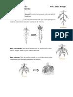 Terminos de Botanica
