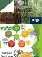 Bosques Deciduos y Semideciduos