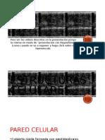 Conceptos Basicos de Inmunologia Parte1