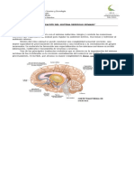 102656744-Guia-de-Biologia-3º-Medio-Sistema-Nervioso-Central.doc