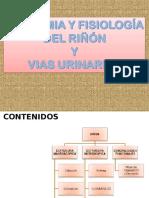 Anatomia e Histologia Renal