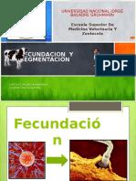 Fecundacion y Segmentacion