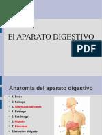 aparatodigestivo-101121120220-phpapp02