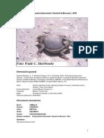 Phrynosoma braconnieri