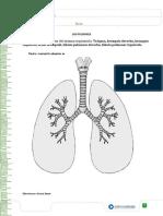 Los Pulmones 5 Basico