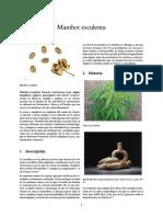 Manihot esculenta.pdf