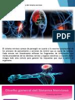 Fisiología del sistema nervioso