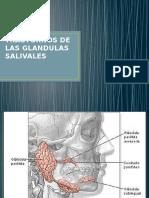Trastornos de Las Glandulas Salivales