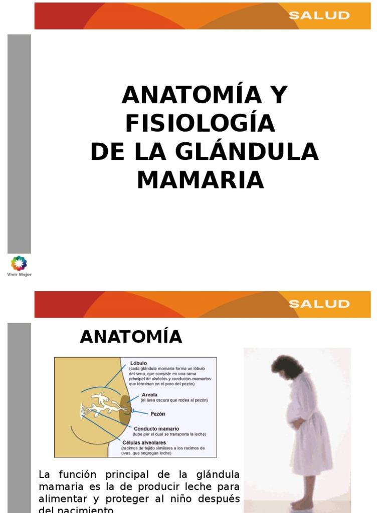 Anatomia y Fisiologia de La Glandula Mamaria
