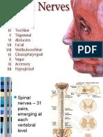 myotmes dermatomes.pptx