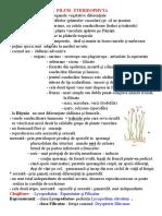 Filum Pteridophyta