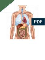 Cuerpo humano.docx