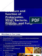Lecture 2 Viruses Bacteria and Fungi