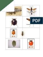 Predadores y Parasitoides (Control)