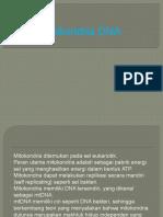 Dna Mitokondria