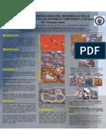 Descripcion de La Glandula Digestiva de o. Maya (Poster)