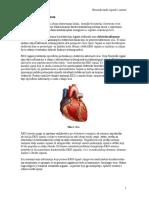 BSS Predavanje 4 Srce i Elektrokardiogram