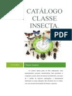 Catálogo Classe INSECTA