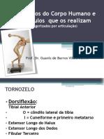 músculos e movimentos.pdf