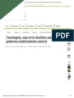 Tanchagem, Uma Erva Daninha Comum é Um Poderoso Medicamento Natural _ Por Trás Da Mídia Mundial