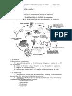 8 enfermedades oidiois.pdf