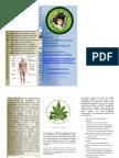 Triptico Cannabis