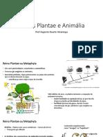 5 Reino Plantae