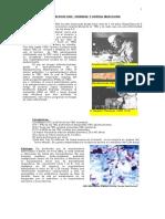 Apuntes de TBC Urogenital