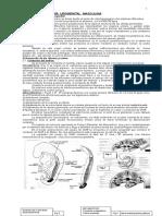 Apuntes de Embriología urogenital