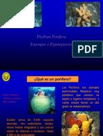 B1. Phylum Porifera.pdf