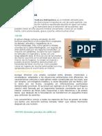 Informe del biohuerto de la UNHEVAL.docx