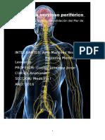Trabajo de Anatomia