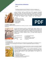 Guía Básica de Introducción a La Peluquería - Paso a Paso