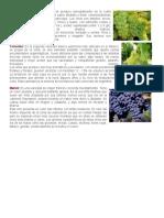 uvas.docx