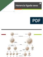 BIOL3349-C3 Herencias Ligada Sexo