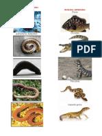Animales Invertebrados