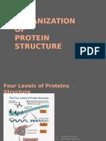 Protein Organization