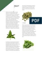 10 Plantas Medicinales Que Se Usan en La Comunidad y Su Procedimiento