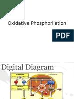 Oxidative phosphorilation