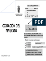 15. Oxidación Del Piruvato