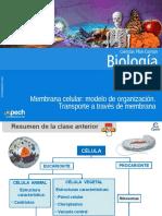 Clase 6 Membrana Celular Modelo de Organización.transporte a Través de Membrana 2016