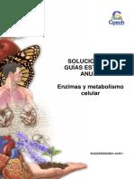 2016 Solucionario Guía 7 Enzimas y Metabolismo Celular