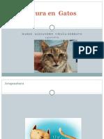 Acupuntura en Gatos