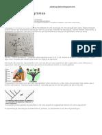Analisando cladogramas