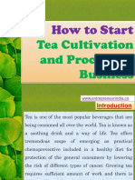 How to Start Tea Cultivation and Processing Business