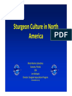 Sturgeon Culture in North America_J Michaels